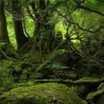 Warsztaty zapachowe: w mrocznym lesie