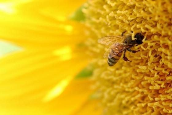 Pszczoła_ www.todaysphoto.com