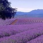 Z ziemi włoskiej do Polski: zapraszamy na warsztaty zapachowe