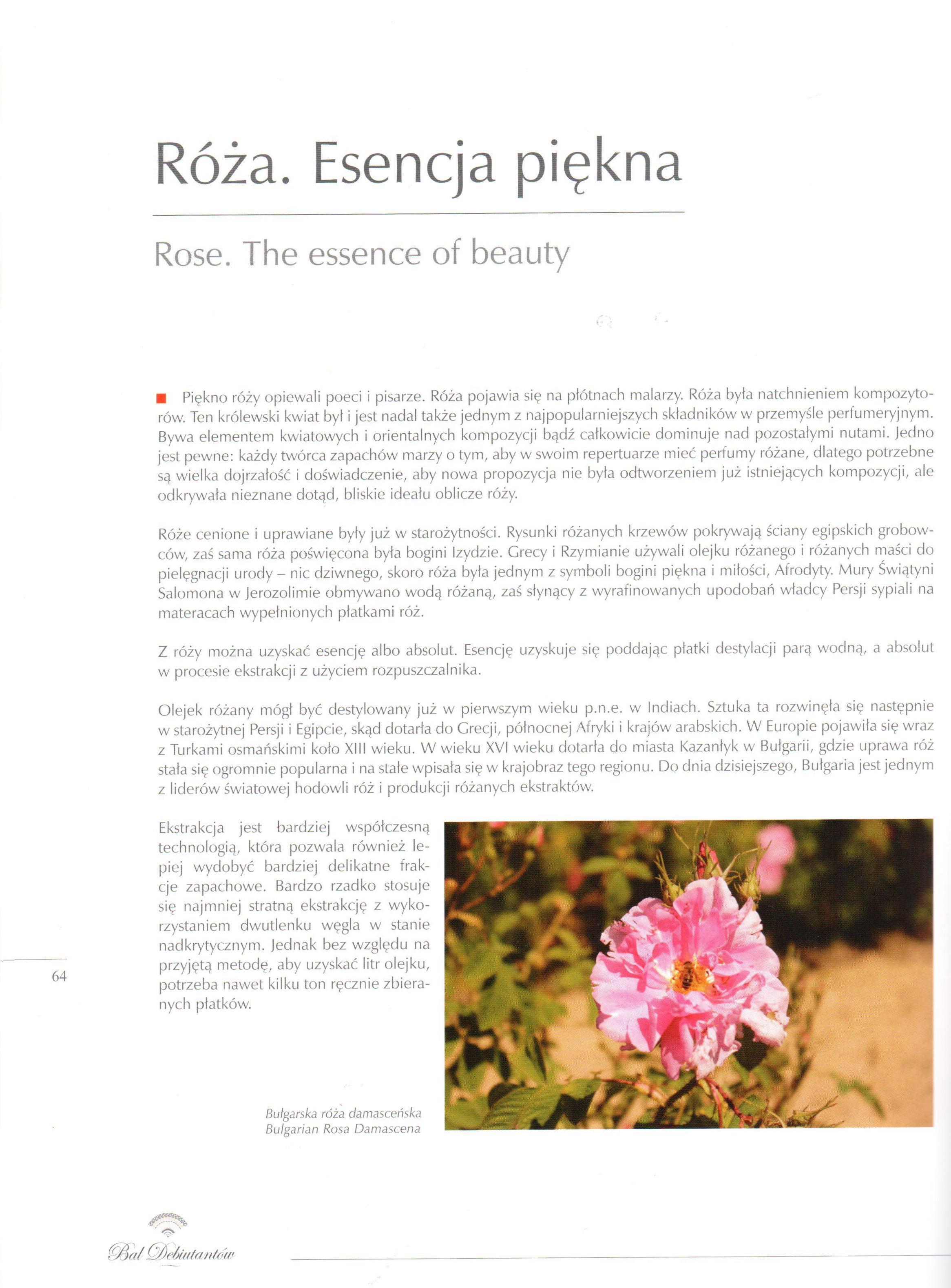 2015.09.05 Album Bal Debiutantów_Artykuł o róży (1)