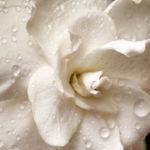 Zapraszamy na białe warsztaty zapachowe :-)