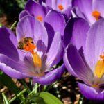 Relacja z wiosennych warsztatów zapachowych